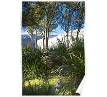 evans crown | native grass | native trees Poster