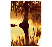 Cypress, Brookgreen Gardens, South Carolina Poster