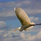 Hovering the Wetlands by byronbackyard