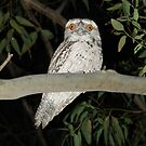 Tawny Frogmouth by Alison  Gainge