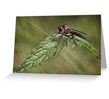 Assassin Fly Greeting Card