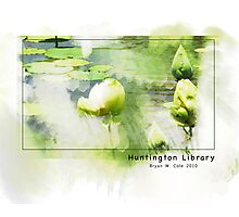Huntington Library Water Lilies Photographic Print