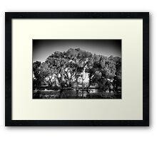 Big Trees(small snakes) Framed Print