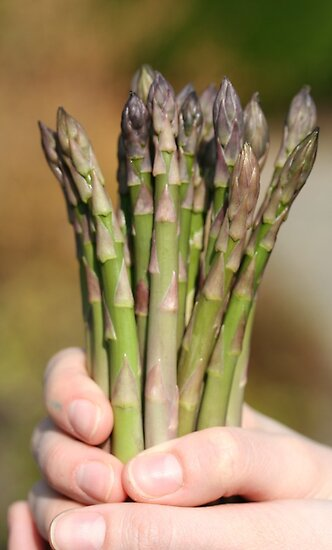 Fresh asparagus by Sue Brown