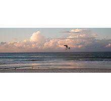 Six seagulls enjoy Kirra beach Photographic Print