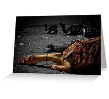 Sleeping camel, Giza Greeting Card