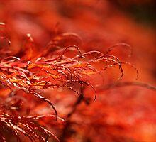 Shades of Red by Josie Eldred