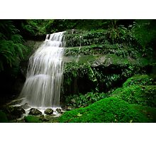 Mossy Glen - Blue Mountains NSW Photographic Print