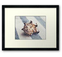 Shell 4 Framed Print