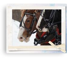Beauties for sleigh ride Canvas Print