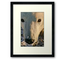Looking up for hope Framed Print
