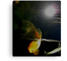 Koi with sun in the water. Canvas Print