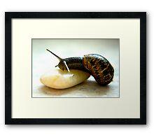 Snail #3 Framed Print