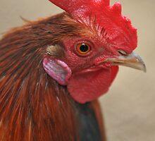 a portrait of a cockerel by 3443black