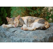 Cat tired and sleeping shhh.... Photographic Print