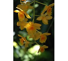 yellow orchid Photographic Print