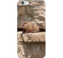Hog On A Ledge iPhone Case/Skin
