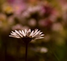 lying in a field of daisies by Ingz