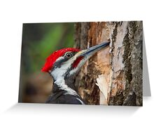 Pileated Portrait Greeting Card