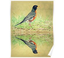 American Robin At Water's Edge Poster