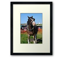 The Working Horse Framed Print