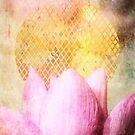 Lotus Sun by Aimee Stewart