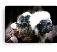 What a cutie...  :-) Canvas Print