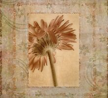 Gerbera  by Ana CB Studio