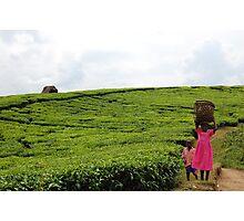 Ugandan Tea Plantation Photographic Print