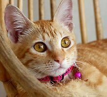Marmalade Caturdays - 1 by meowiyer