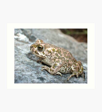 Green Toad Art Print