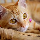 Marmalade Caturdays - 2 by meowiyer