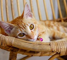 Marmalade Caturdays - 3 by meowiyer