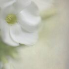Floral White by AnnieSnel