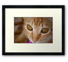 Marmalade Caturdays - 4 Framed Print