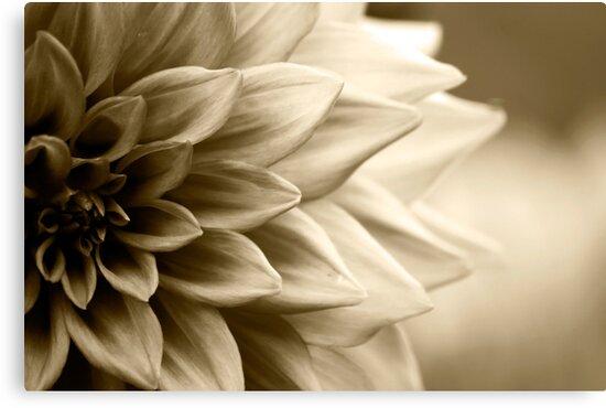 A cascade of petals by rickvohra
