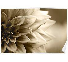 A cascade of petals Poster