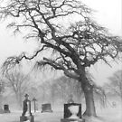 Graveyard Tree in Winter by Debbie  Roberts