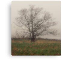 Tree in Fog, Yarmouth Nova Scotia Canvas Print