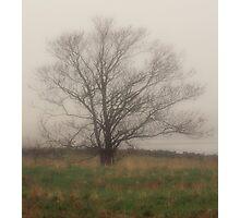 Tree in Fog, Yarmouth Nova Scotia Photographic Print
