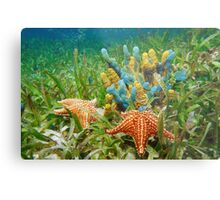 Underwater life with colorful sponges and a starfish Metal Print