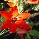 Vibrant Hue by takemeawaycn