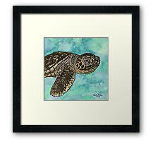 baby sea turtle Framed Print