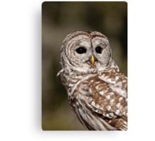 Barred Owl - Brighton, ON Canvas Print