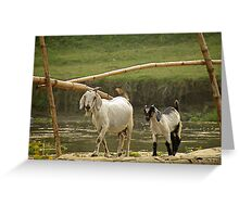 billy goat gruff Greeting Card
