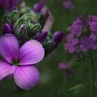 Purple Passion by Lori Deiter