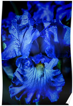 Rhapsody in Blue by Barbara  Brown
