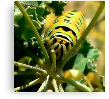 Who Ate All the Fennel? Canvas Print
