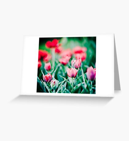 Tulips... Greeting Card