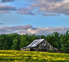 """Old Country Barn, With Spring Green Trees & Field of Yellow Flowers"" by Melinda Stewart Page"